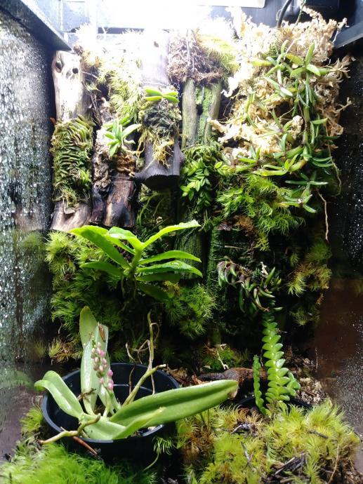 Help! My 3 day old terrarium already has mold :(-orchid-jpg