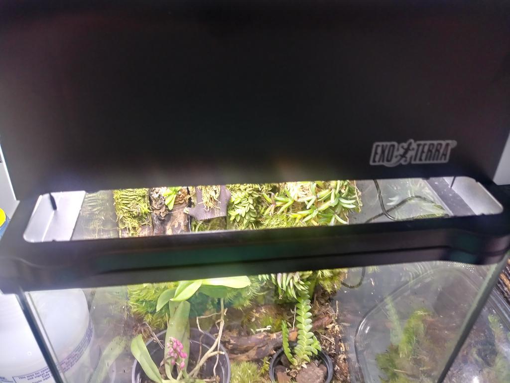 Help! My 3 day old terrarium already has mold :(-20180511_135203_hdr-jpg