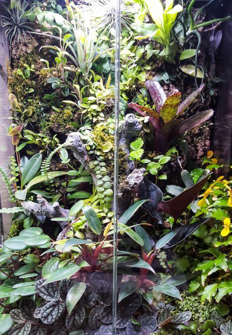 RV traveling mini orchids-20180513_100704-jpg