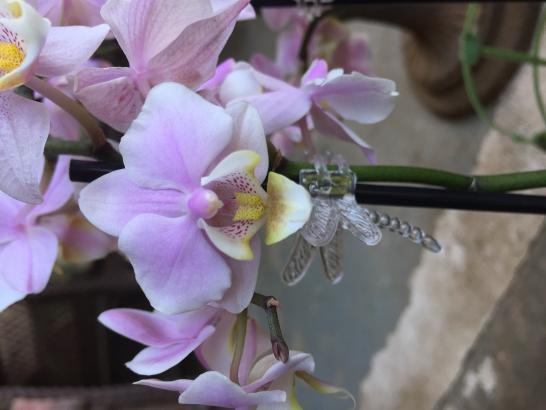 Lowes Phalaenopsis with spotted leaves-c3962453-75f4-48fc-9f13-7e1b3c13cb78-jpg