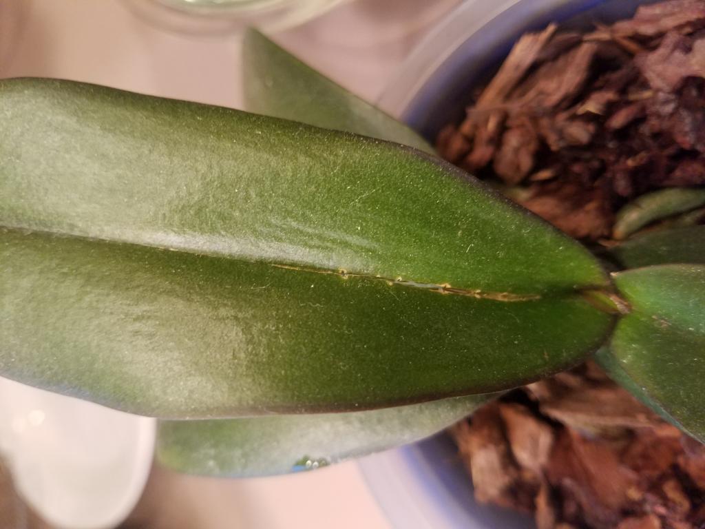 Rotting leaf?-1526428732591711988151-jpg