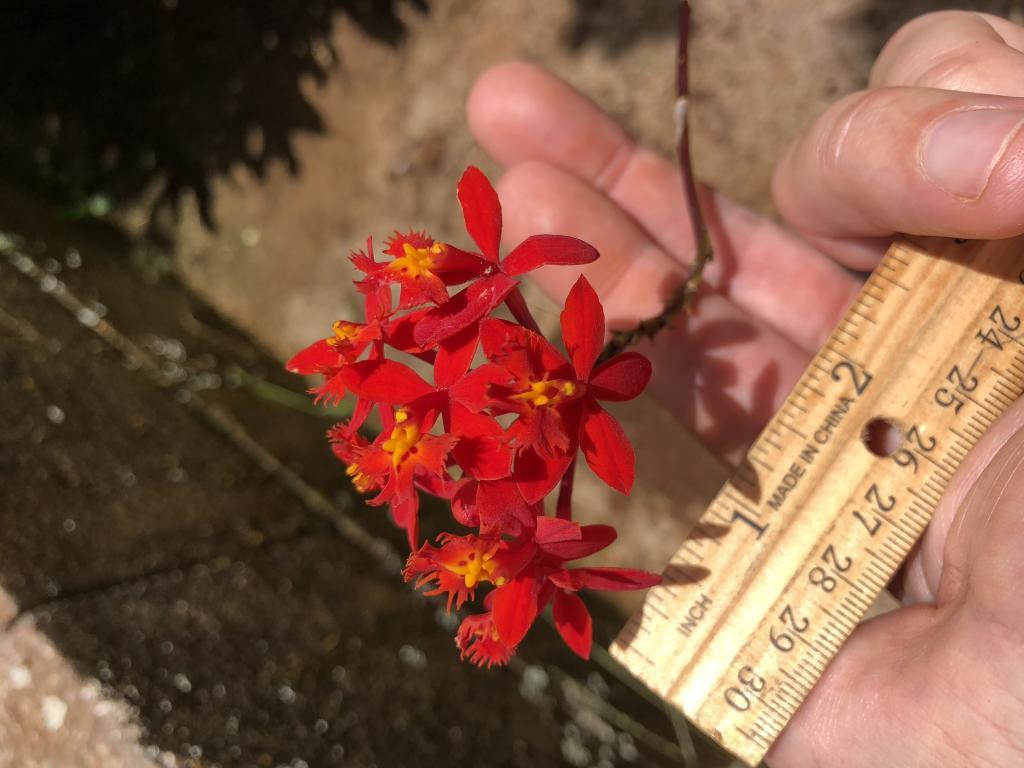Plant ID number 3-img_4006-jpg