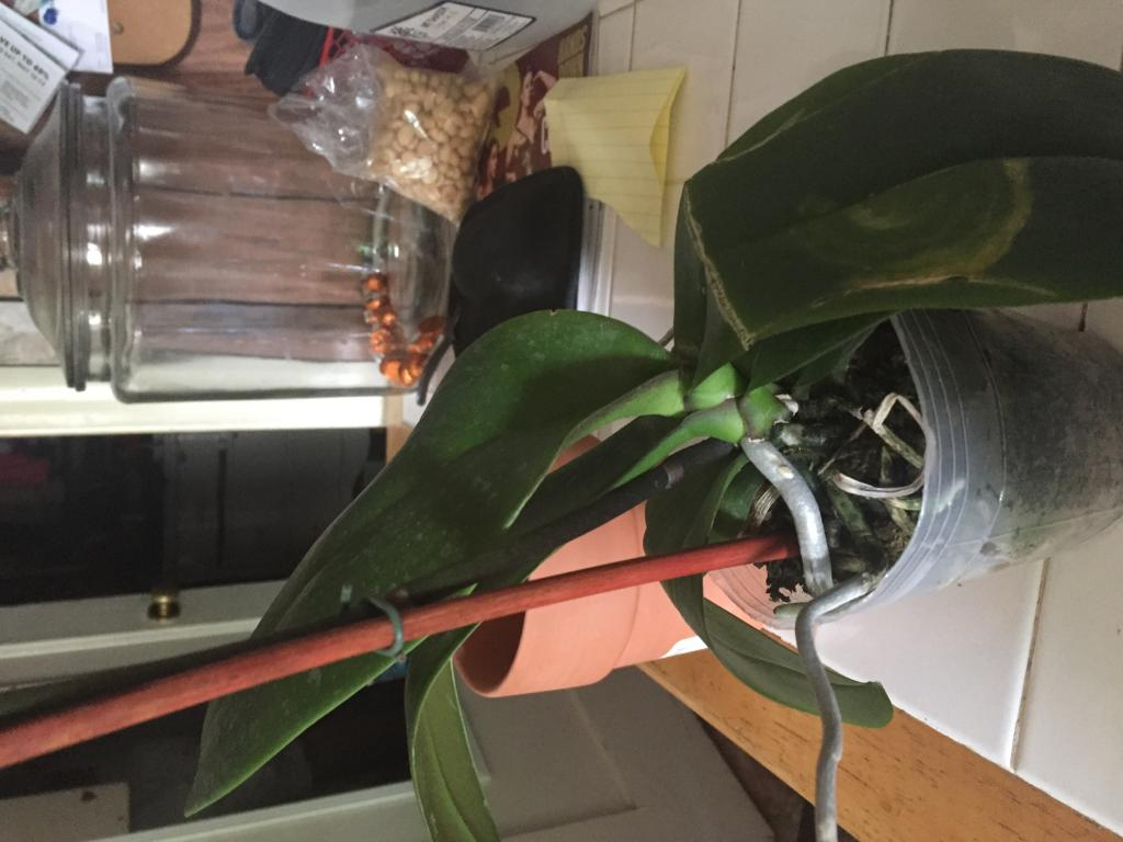 Broken leaf-image-jpg