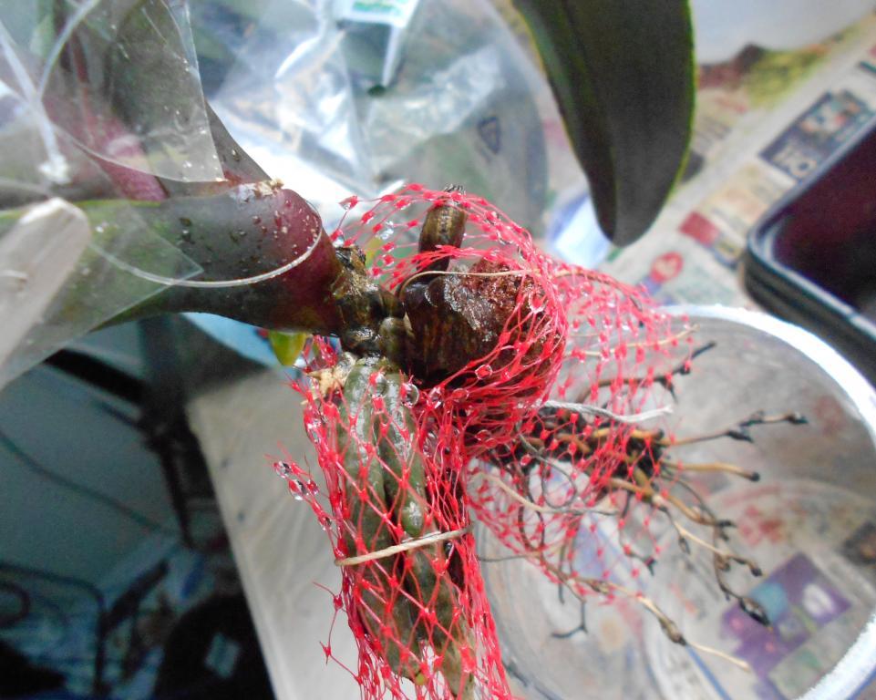 -net-potting-phal-08-jpg