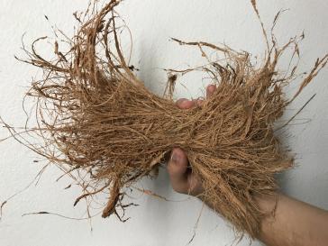 Can I use freshly husked coconut fiber in my potting medium?-f695dacd-9203-48e4-bafc-b877eb51180f-jpg