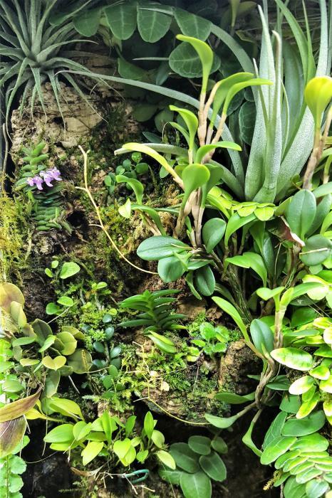 RV traveling mini orchids-20180617_092702-jpg