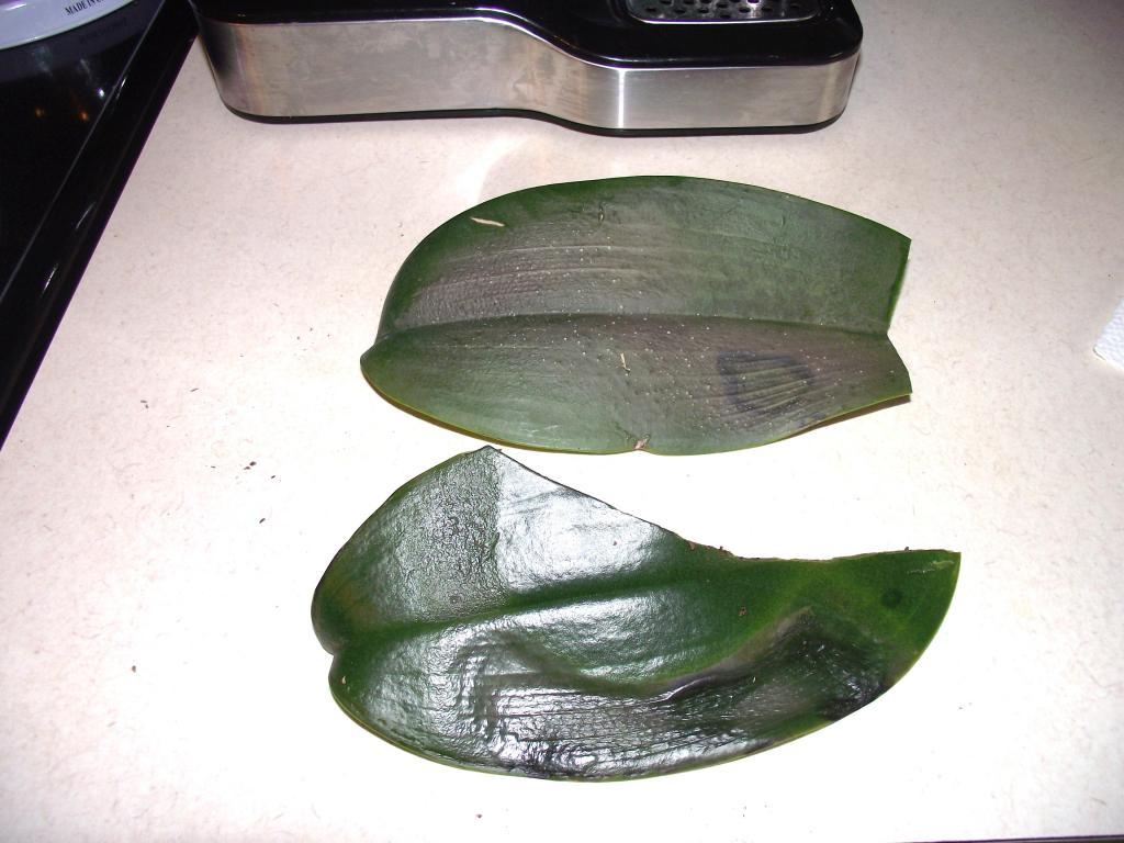 what is this disease on my phaleonopsis-orchiddisease-002-jpg