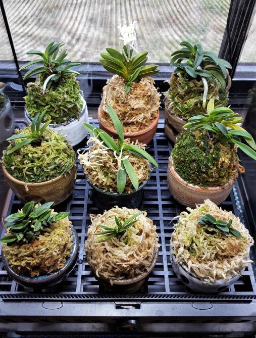 RV traveling mini orchids-20180711_114535-jpg