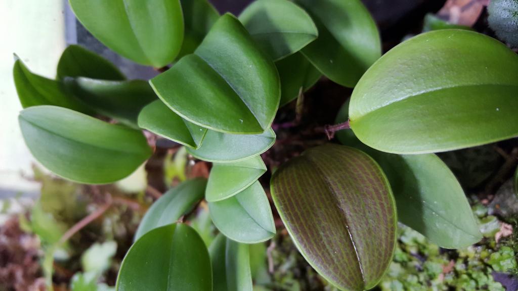 RV traveling mini orchids-20180607_142737-jpg