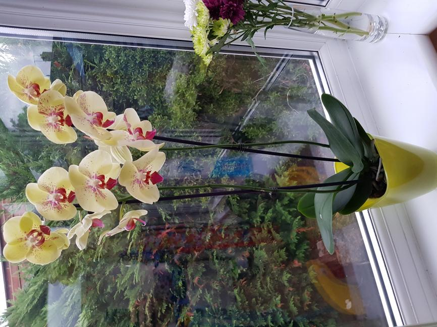 What is the proper name for this orchid?-20180729_201647-jpg