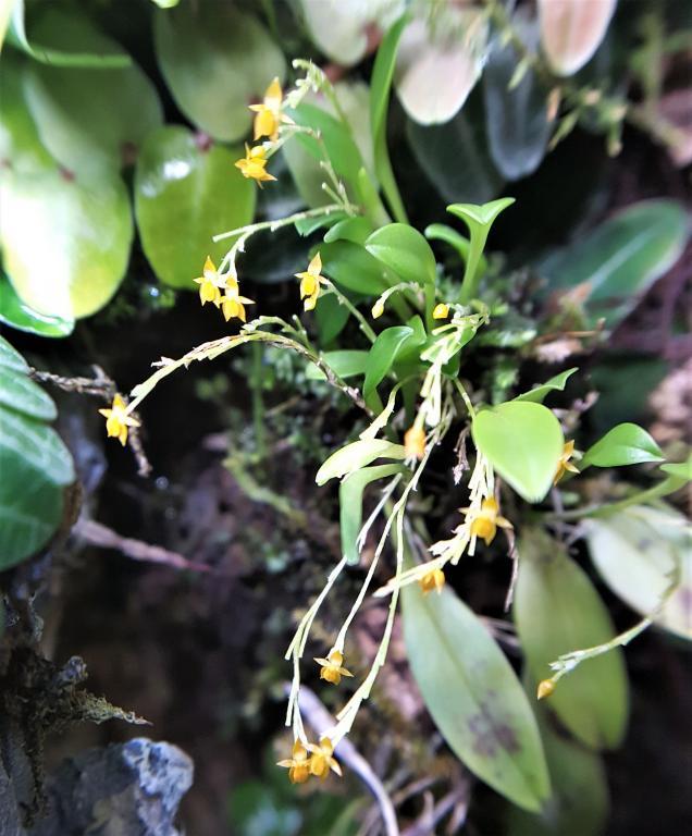 RV traveling mini orchids-20180801_200646-jpg
