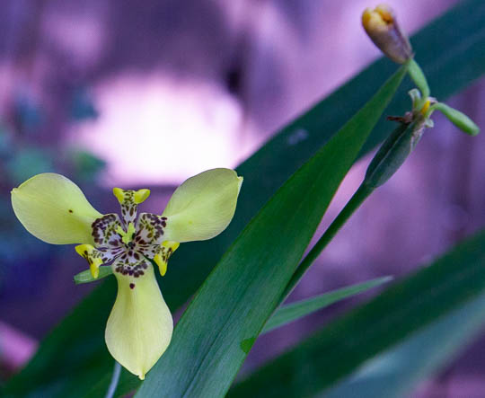 Is this in the orchid family?-unknown-1-jpg