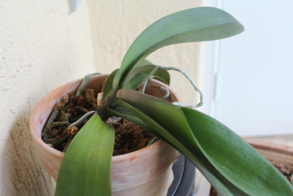 bizzare leaf growth-img_4145-jpg