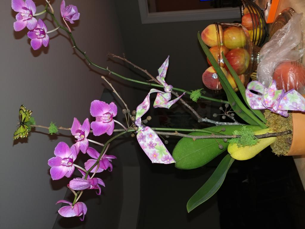 Help! What kind of orchid was I gifted? I'm killing it...-0805182030-jpg