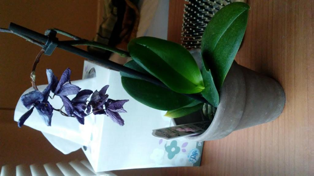 Is this orchid dead or dormant?-20180912_091217-1-jpg