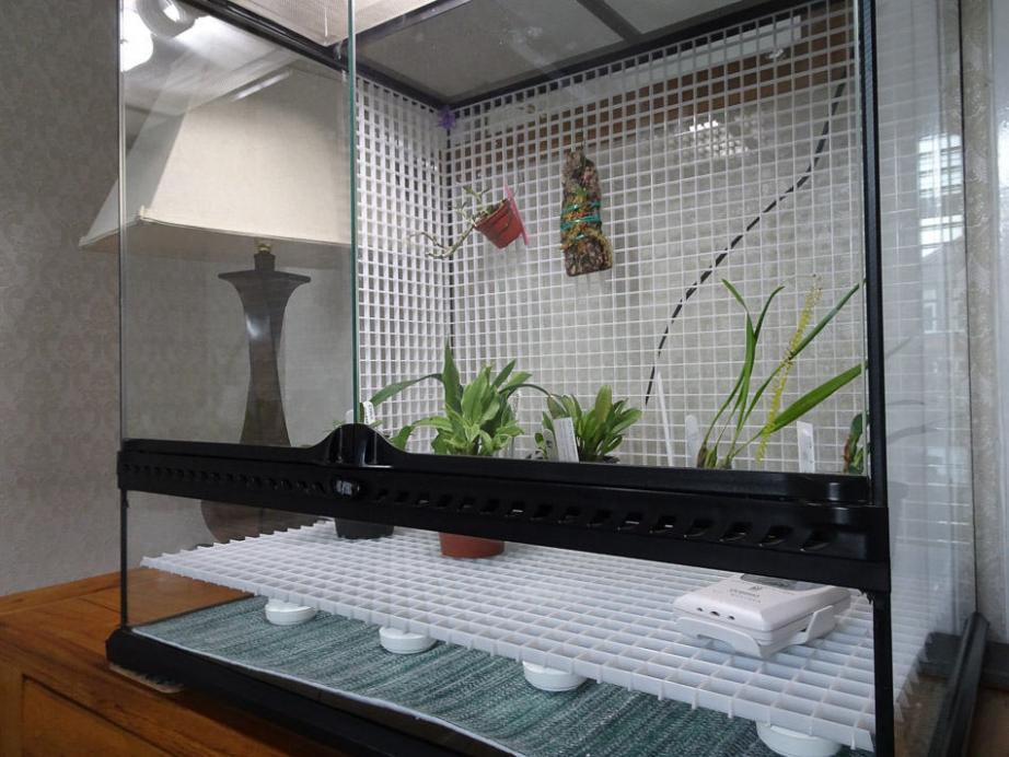 Planning a new terarium-terrarium-crated-jpg