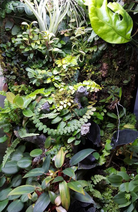 RV traveling mini orchids-20180930_100242-jpg
