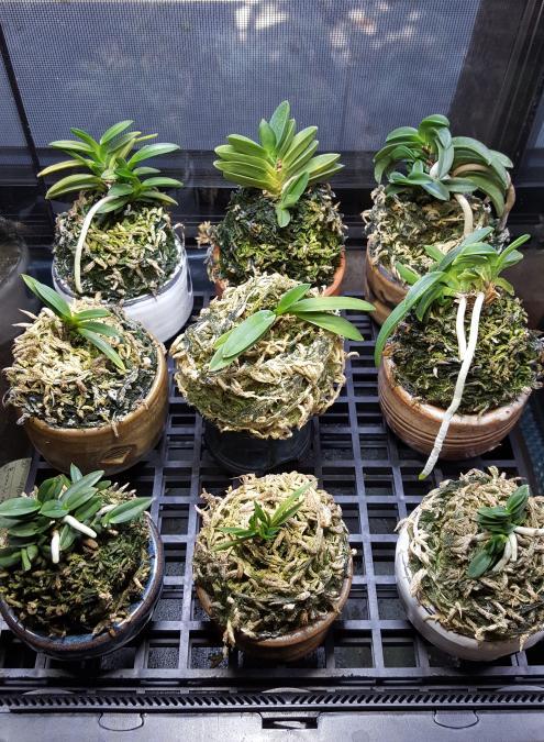 RV traveling mini orchids-20180930_100338-jpg