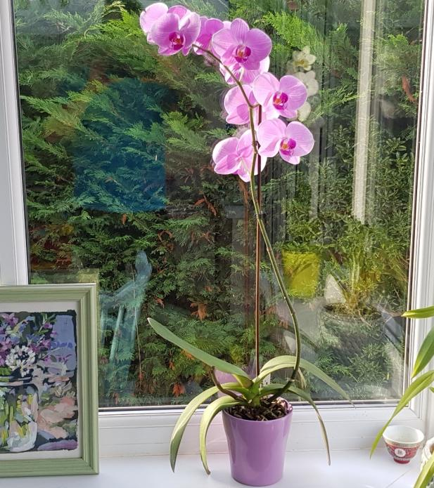 Flower spike update-smartselect_20181013-164407_gallery-jpg