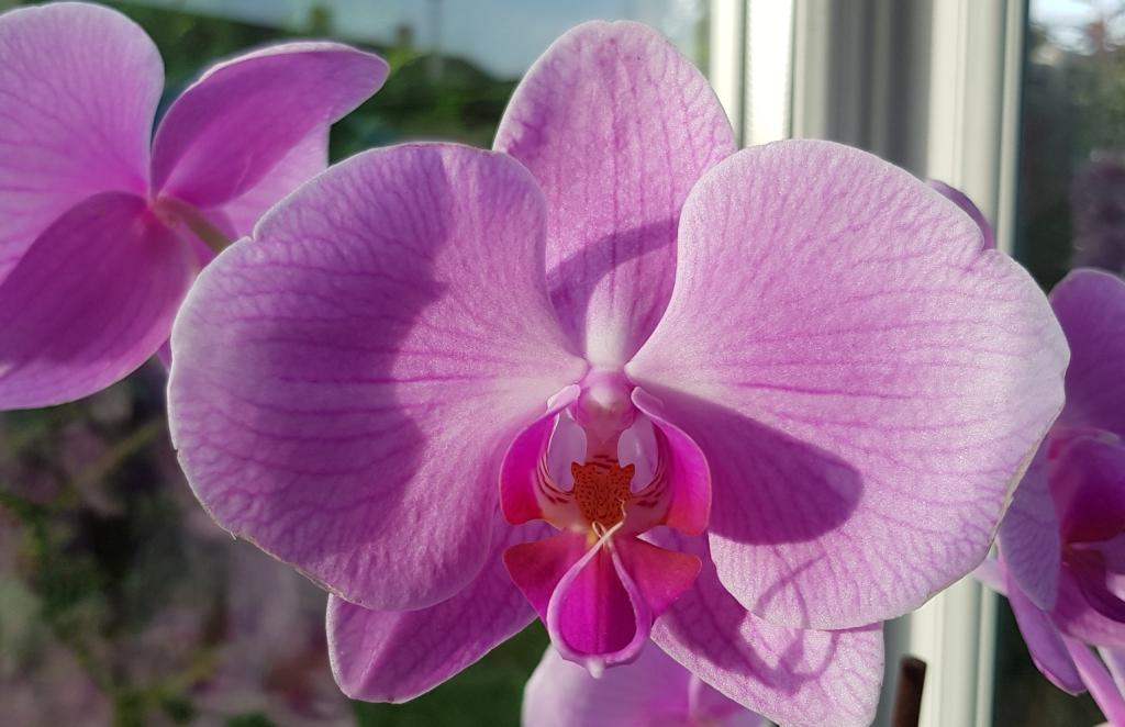 Flower spike update-smartselect_20181013-164420_gallery-jpg