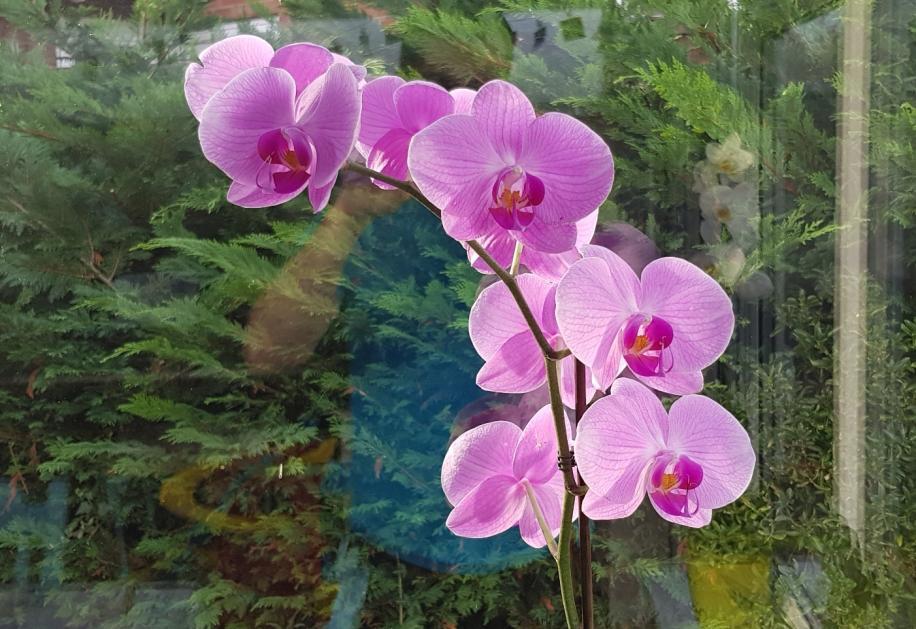 Flower spike update-smartselect_20181013-164431_gallery-jpg