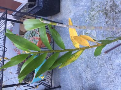 Help with leaves-2054ebbc-7271-4879-9ded-6594ca525927-jpg
