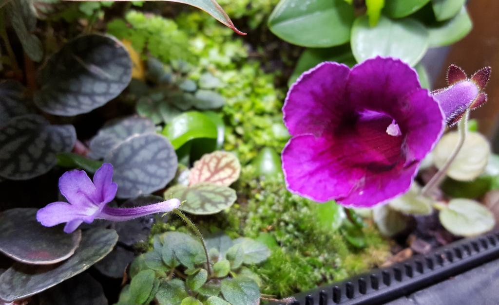 RV traveling mini orchids-20181018_085437-jpg