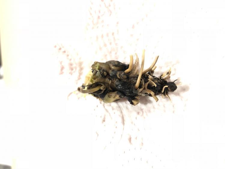 How do I save this philaenopsis-8d33c1dc-2019-41e7-90fe-04f4da0d77e8-jpg