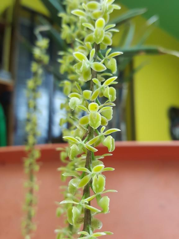 4 different orchid ID-2-jpg