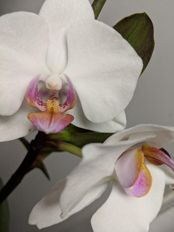 Orchids and me-orchidfront-jpg