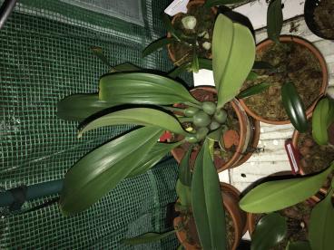 medusae Blooming-017ea826-a1de-4e36-be79-2a333dbbbb65-jpg