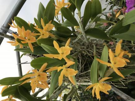 Bc. Daffodil-34fd572e-4839-4ae5-b362-e8d20f0031d1-jpg