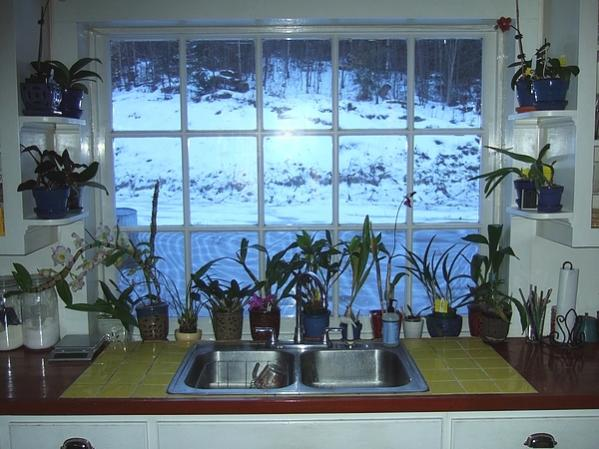 New shelves in my orchid window-kitchen2019jan06-jpg