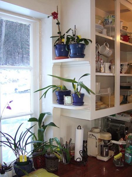 New shelves in my orchid window-kitchen2019jan03-jpg