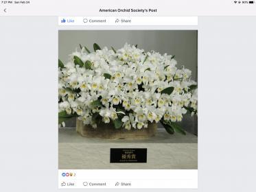 Multiple blooms in one pot-3c6f1303-df6b-42aa-876f-6df158ac1b8f-jpg