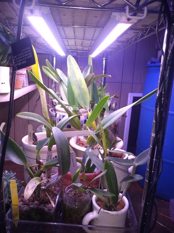 Waterproof LEDs for tank in bright room-img_20190302_113709202-jpg