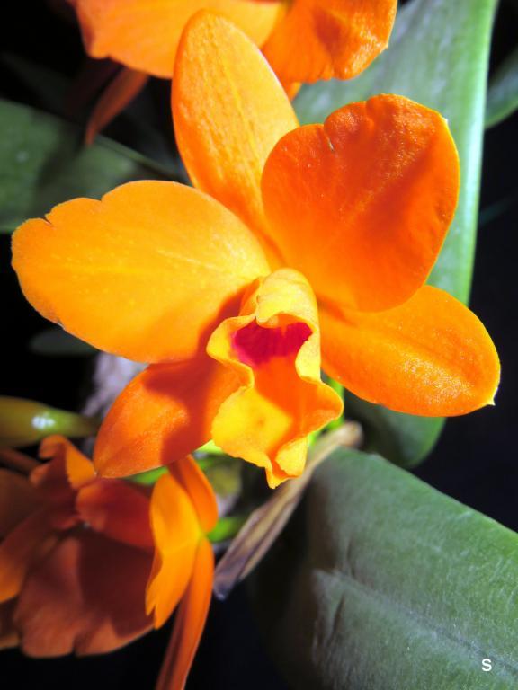 Pot. Shinfong Little Sun-potshinfg03193-jpg
