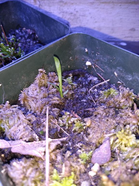 Orchids That Grow Easily From Seed-img_20190315_144051088-jpg