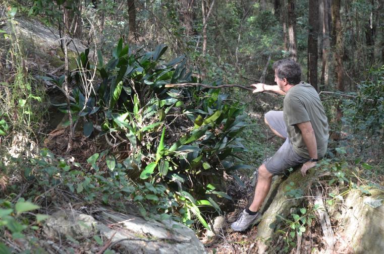 Local orchid hunt (1 of 2)-speciosum-jpg