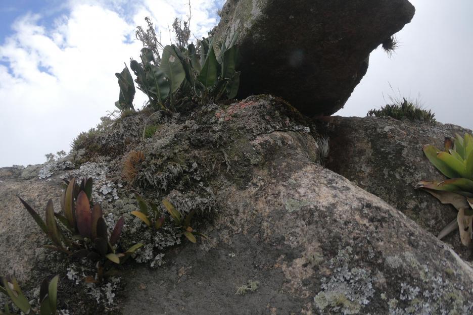 Zygopetalum and rup. Laelia in Rio de Janeiro-rupiculous3-jpg