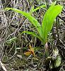 ID Colombia Orchid Please-dsc05165-jpg