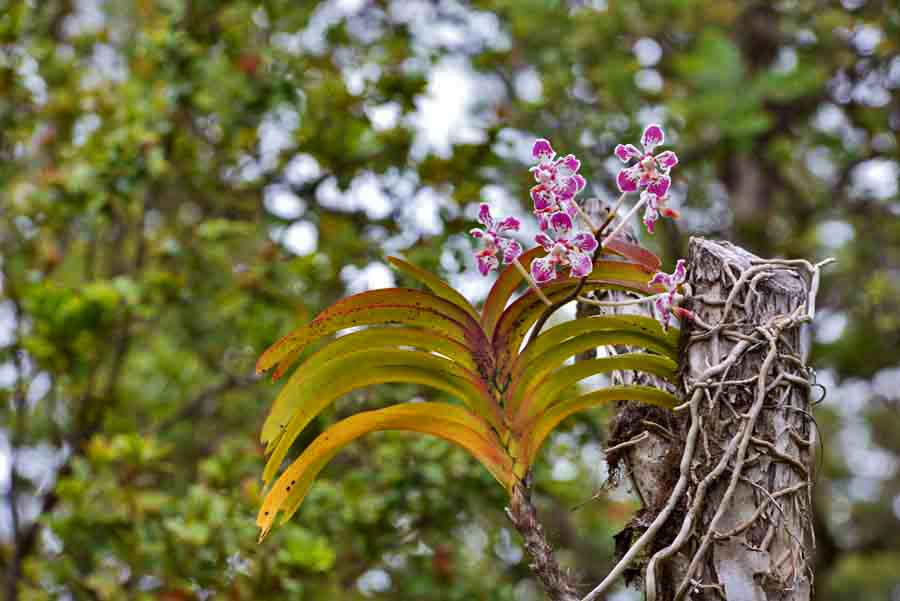 Feral Vanda, among other things-dsc_7125_tweaked-jpg