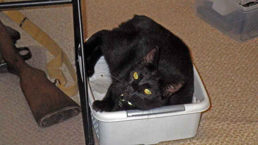 Cats in boxes-rimg0260_sm-jpg