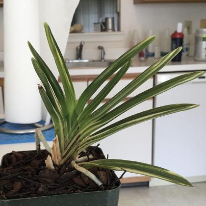 Amami Plant with Strong Sense of Survival-5bf8708c-5c66-4e74-a46f-051c753509a4-jpg