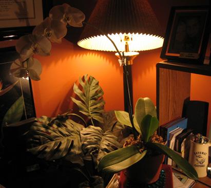 Phalaenopsis slowly losing its leaves...please help!-img_3669-jpg