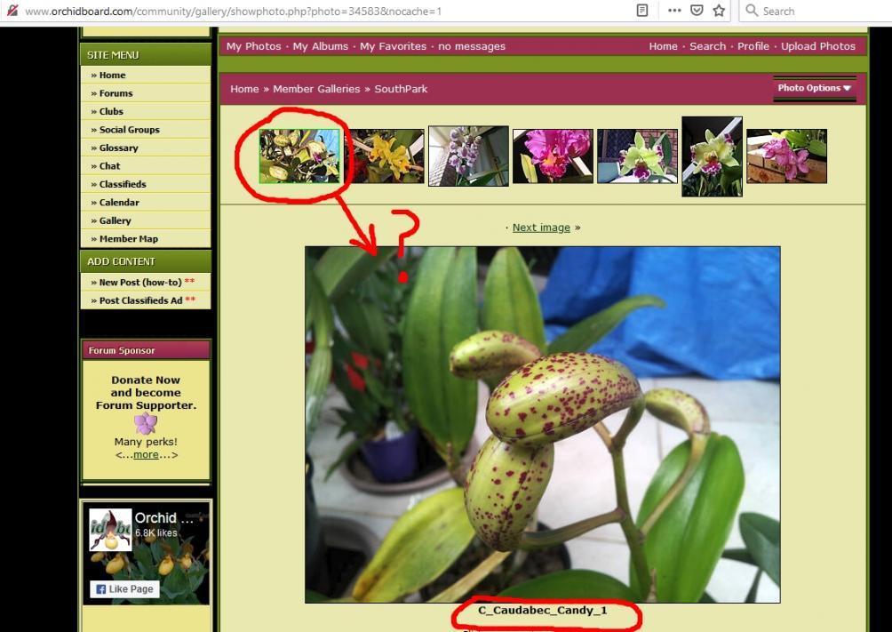 Members gallery - filename stuck-overwrite-jpg