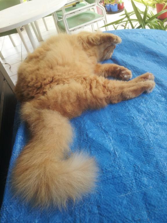 ginger cat-gingercat4_5-dec2020-jpg