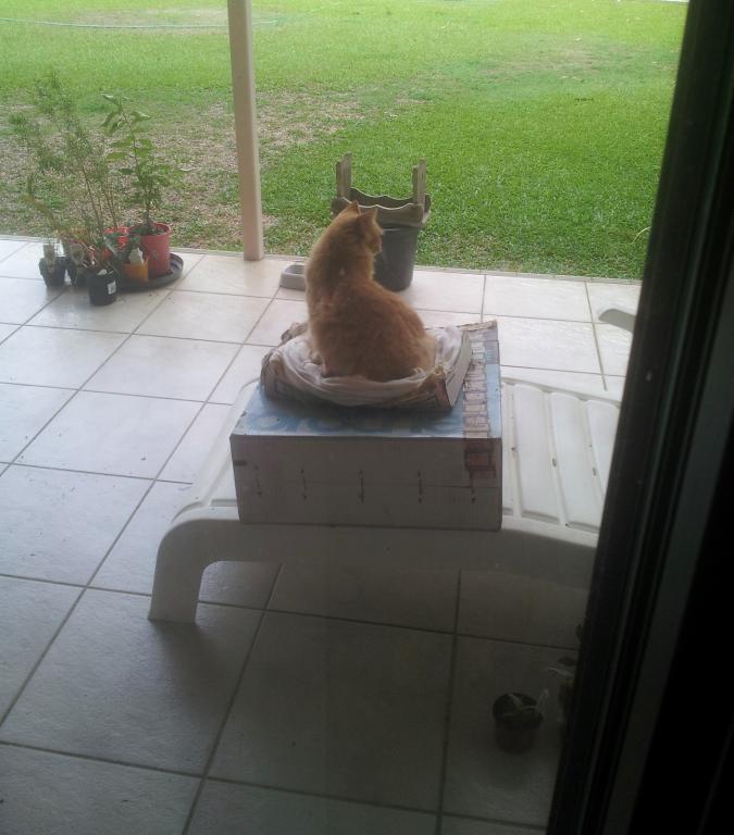 ginger cat-gingercat_typewriter-box-jpg