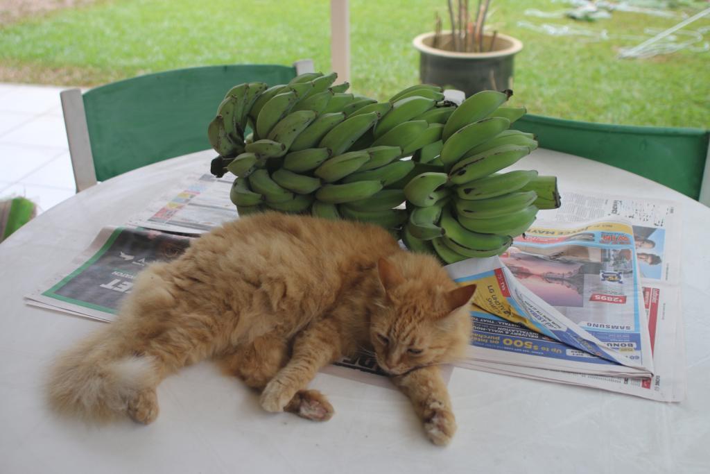ginger cat-gingercat_8-dec2020-jpg