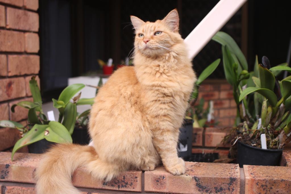 ginger cat-gingercat2_18-dec2020-jpg